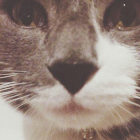 Petit Chat ? Hello World Cat Selfie Miaou Adorable Ilovemycat