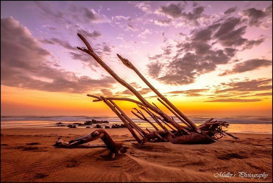 Sunrise Driftwood BEACH!  Seascape Sea And Sky Sea