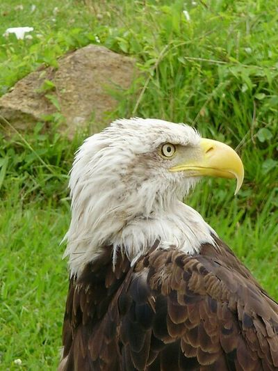 Animals Eagle Cabarceno