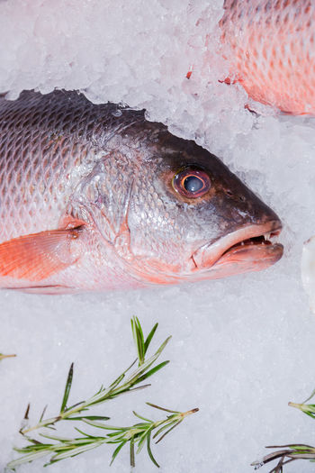 fresh fish on ice Fish Vertebrate Seafood Animal Cold Temperature Food And Drink Raw Food Food Freshness Ice Wellbeing Close-up Healthy Eating No People Animal Themes Indoors  For Sale Fish Market One Animal Fishing Industry Animal Eye