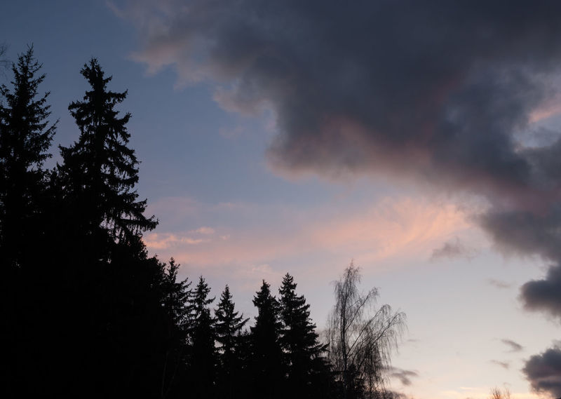 Diagonal composition Diagonal Novopolotsk Spruce Tree Beauty In Nature Cloud - Sky Clouds Clouds And Sky Day Fir Trees Forest Growth Low Angle View Nature No People Outdoors Scenery Scenics Silhouette Sky Sunset Tranquil Scene Tranquility Tree