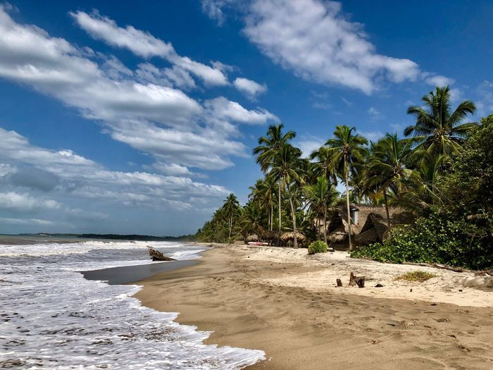 Sky Land Tree Beach Water Cloud - Sky Plant Tropical Climate Sand Sea Palm Tree Tranquility Scenics - Nature Beauty In Nature No People