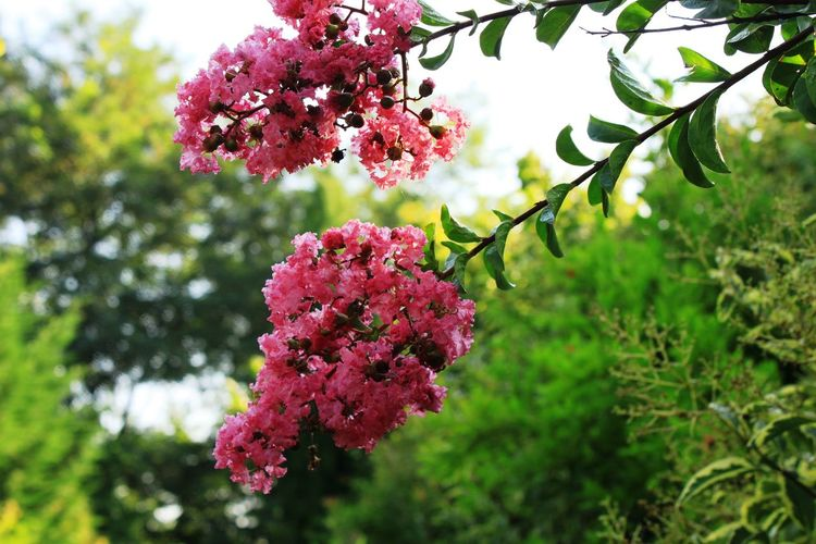 Daylight Flower