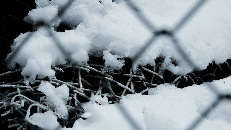 Decay under Cold Temperature Winter Snow Nature Weather Frozen No People Ice Outdoors Fence Under The Snow Metal Fence Under The Snow