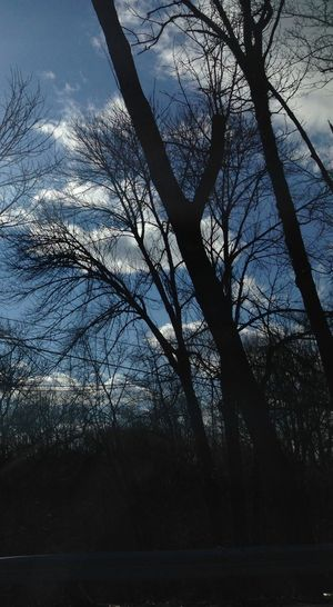 Trees Sky's Nature Cool Beautiful Photagraph I Took This In The Car