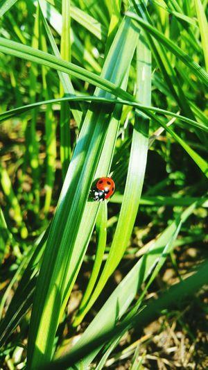 Ladybug ☺ Nature Grassland