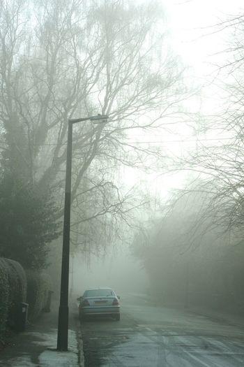 Misty Morning Cold Wintertime Winter Quiet Roads Eerie Eerie Scene Eerie Beautiful Light Snow Misty Trees