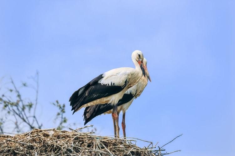 Bird perching on a nest