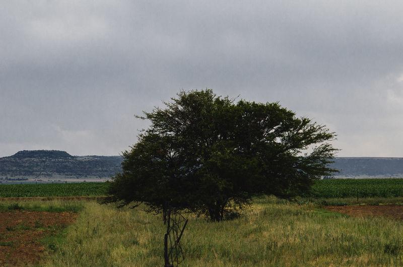 Trees in da