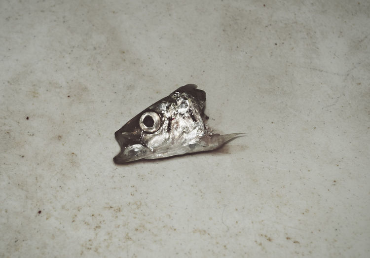 head of a sardine fish Animal Themes Chopped Close-up Dead Discarded Disgusting  Eerie Eye Fish Food HEAD Indoors  Leftover No People One Animal Part Of Pilchard Raw Refuse Sardine Thrown Uncooked Waste