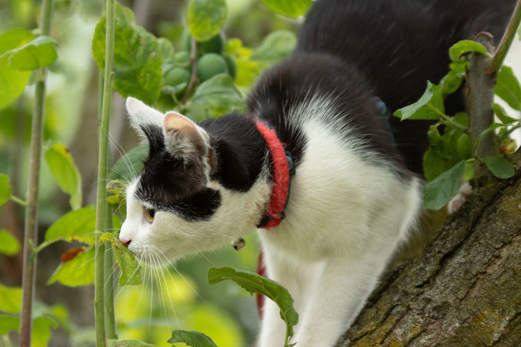 Mammal Animal Themes Animal One Animal Cat Feline Domestic Cat Vertebrate Domestic Pets Domestic Animals Plant No People Nature Plant Part Leaf Close-up Focus On Foreground Tree Whisker Outdoors