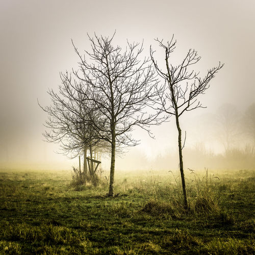 Trees on a foggy morning. Bare Tree Beauty In Nature Day Landscape Nature No People Outdoors Tranquil Scene Tranquility Tree