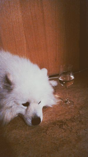 Meeting Friends Party Dog Love Wine First Eyeem Photo