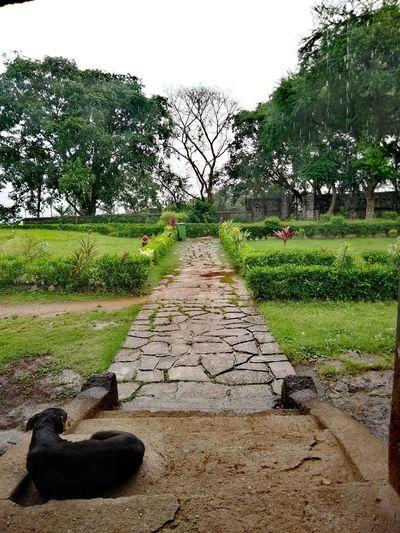 India Mumbai Caves Dog Rainning Mumbaimonsoon Tree Water Sky Grass Green Color The Great Outdoors - 2018 EyeEm Awards The Traveler - 2018 EyeEm Awards