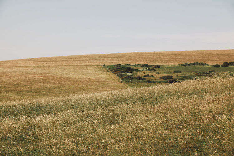 Agriculture Beachy Head Beachyhead Field Grass Grassy Growth Holiday Horizon Over Land Landscape Nature No People Non-urban Scene Outdoors Plant Remote Rural Scene Scenics Sky Summer Travel The Great Outdoors - 2016 EyeEm Awards The Great Outdoors With Adobe