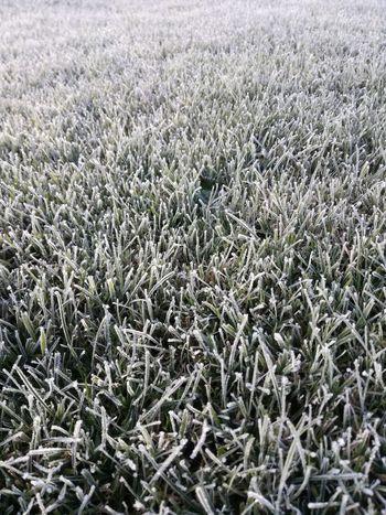 Grass, Wintertime No People Frozen