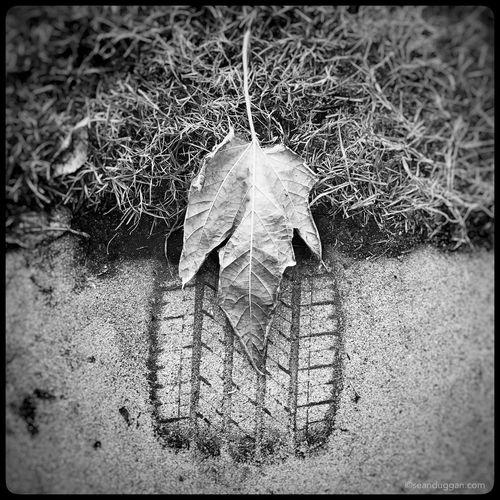 Leaf & Tire Mark. Leaf Tread Marks Blackandwhite Blackandwhite Photography Black And White Photography Black&white Always Looking