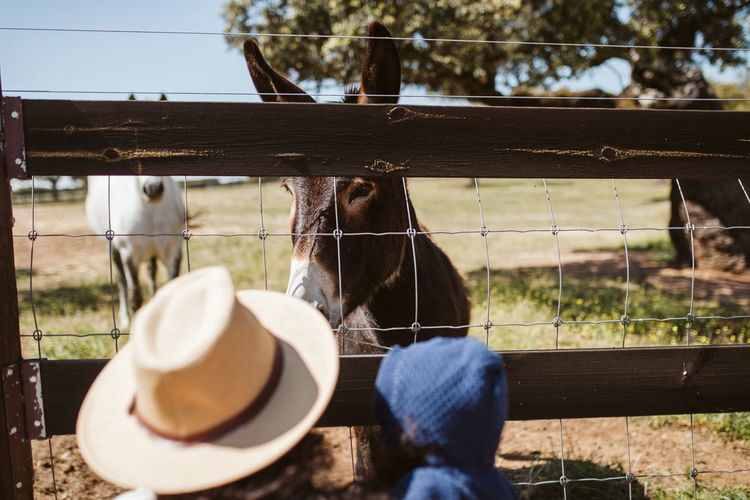 Donkey Donkeys Animal Themes Animal Farm Farm Life Fence Hat Mother & Daughter Family Weekend Leisure Activity Mammal Domestic Animals Vertebrate Domestic Day Pets Boundary Livestock Barrier One Animal Herbivorous Animal Pen Animal Head  Animal Wildlife Ranch Outdoors Wood - Material Nature