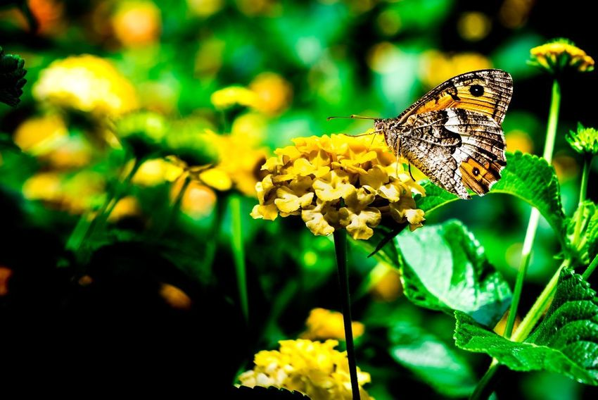 Nikonphotography Nikon Plant Beauty In Nature Flower Animal Wildlife Close-up Flowering Plant Green Color Animal Themes Animal Nature