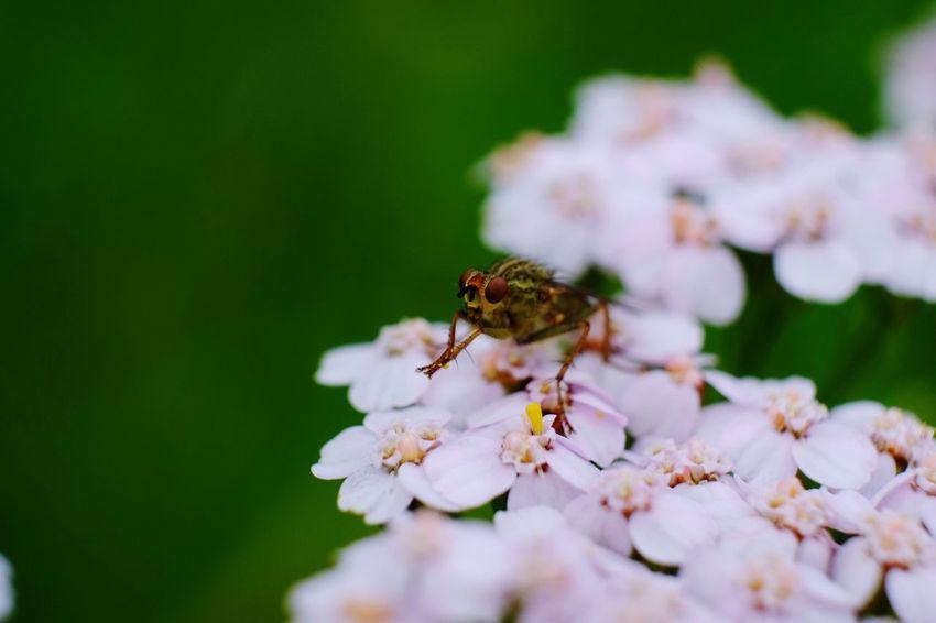 EyeEm Selects Flower Head Flower Bee Eating Pollination Insect Springtime Petal Feeding  Full Length