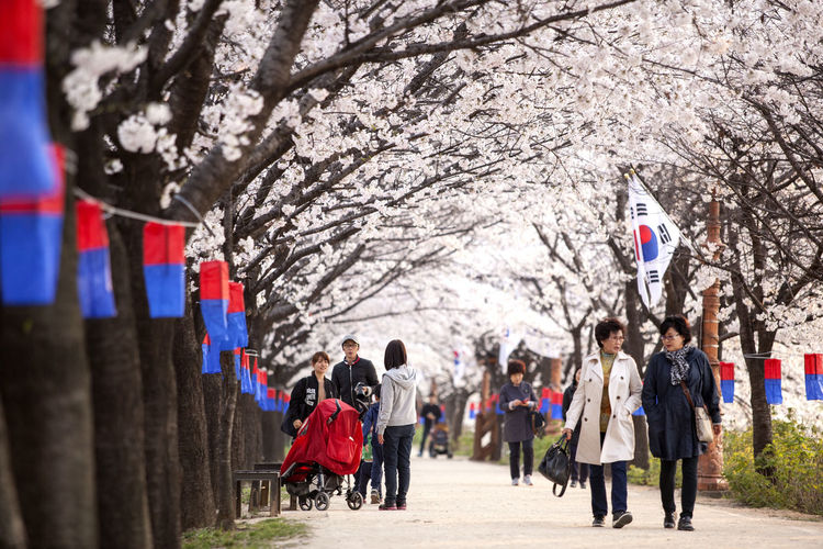 Cheongsachorong Cherry Blossom Cultures Day Flag Flags Group Of People The Street Photographer - 2016 EyeEm Awards Leisure Activity Lifestyles Medium Group Of People Men Mixed Age Range Mother And Children Outdoors People Person Rear View Street The Way Forward Tourist Tradition Tree Walking Walkway