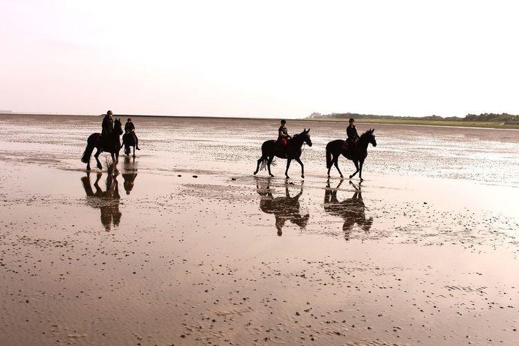 Northern Sea Watt Wattenmeer Horse Horsebackriding  Silhouette Horseback Riding