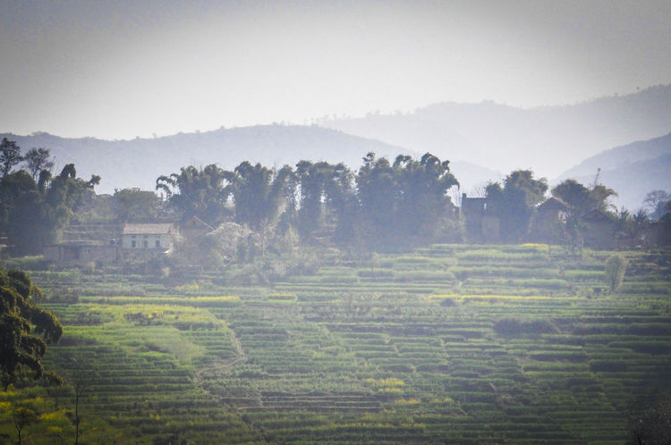 Agriculture Beauty In Nature Countryside Day Field Growth Haze Landscape Landscape_Collection Misty Nature Nepal No People Outdoors Rural Scene Scenics Terraced Field Tranquil Scene Travel Travel Destinations Travel Photography Tree