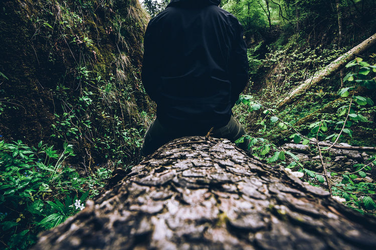 Rear view of man standing by tree trunk in forest