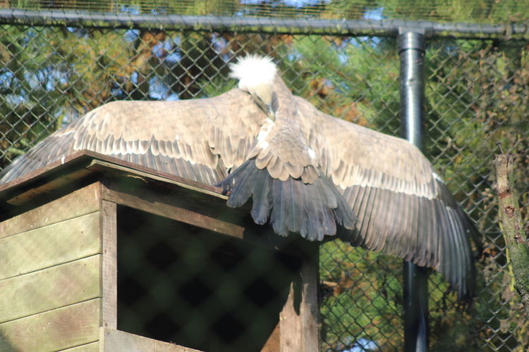 Taking A Sunbath 😃👍. Vulture ThingsWithWings  Noedit Beautiful Bird Of Prey Beauty In Nature Bird Photography Zoo Day Outdoors