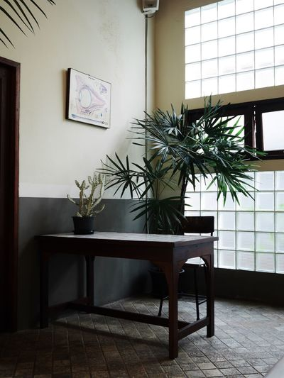 Potted plant on table at home