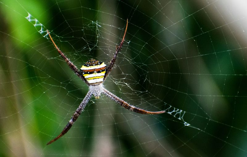 Animal Leg Full Length Web Insect Spider Web Spider Survival Intricacy Close-up