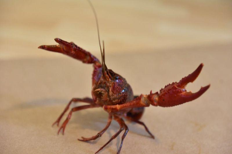 Close-up of crab at beach