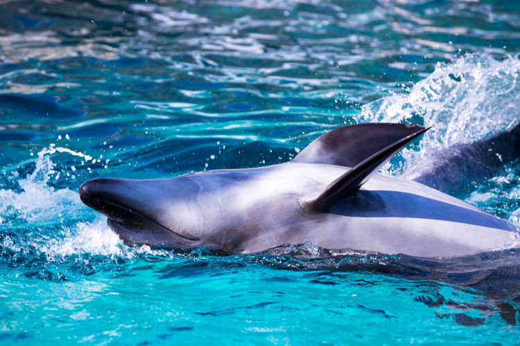 Animal Wildlife Animal Animal Themes Water Mammal Animals In The Wild Underwater Aquatic Mammal Sea One Animal Swimming Dolphin Blue Vertebrate Nature Waterfront No People Day Pool Marine Outdoors Swimming Pool Turquoise Colored