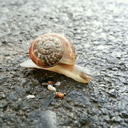Salyangoz Snails Nature Life Spring Karekadraj Benimkadrajim