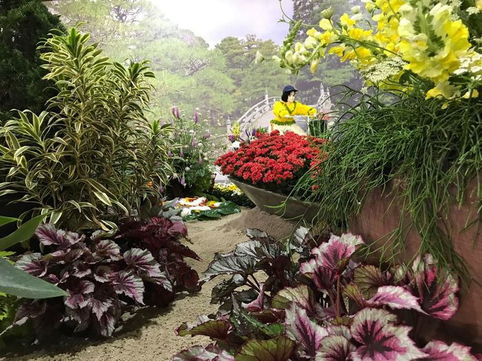 Atibaia Flower Plant Beauty In Nature No People Fragility Florist Greenhouse Nature Freshness
