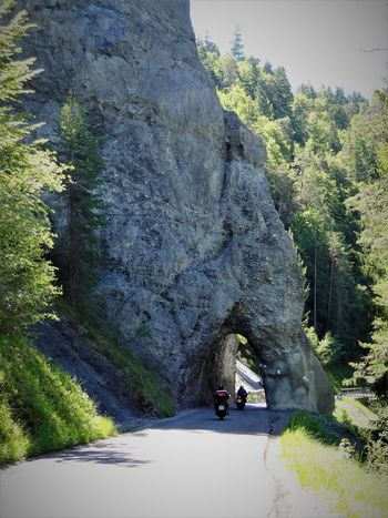 Hole to drive in Day Graubünden Hole In The Wall Mountain Nature No People Outdoors Road Rock Schweizer Alpen Tree Tunnel Zault