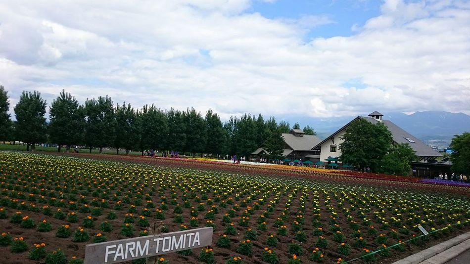 ファーム富田 Farm Flower Garden Enjoying Life Furano Hokkaido,Japan EyeEm Nature Lover Refresh