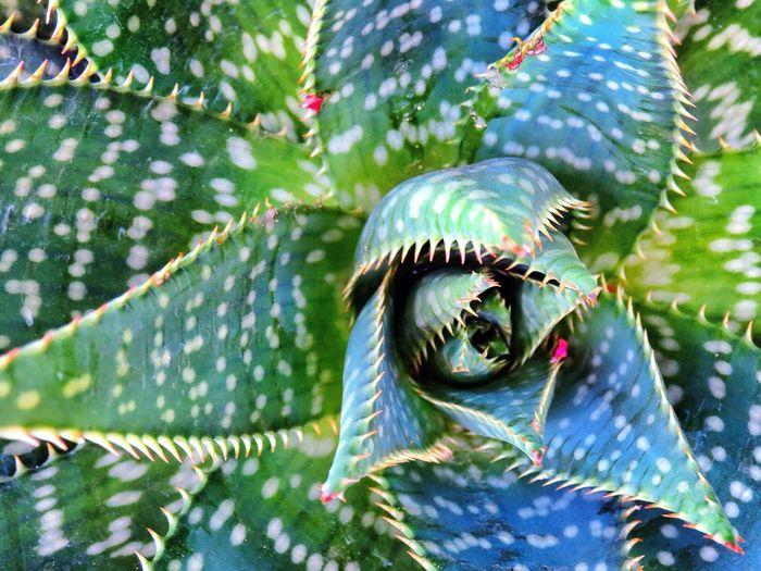 Full Frame Shot Of Aloe Vera Plant