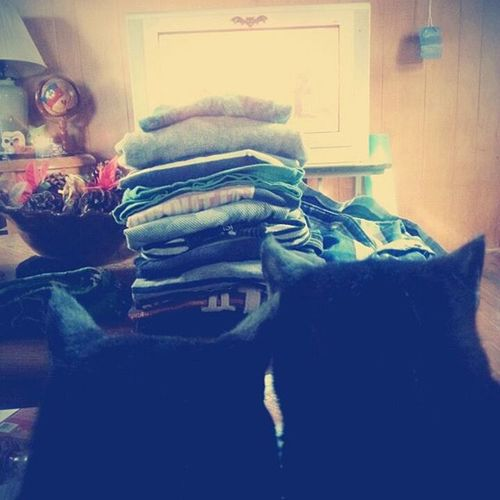 Just trying to fold clothes and watch the TV.....not happening when you have cats. __________________________________ Cats Blackcats Oliviabronte Rubyredskinnygirl Lapcats Rescue Photooftheday New Nochill Nopersonalspace