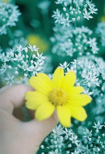 beautiful yellow blooms Nature Yellow Beauty In Nature Beauty Flower