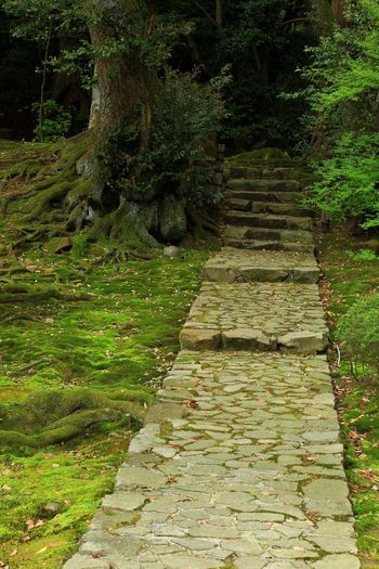 Steps Steps Stone Stone Steps Spring Fukui MIKUNI Temple Road