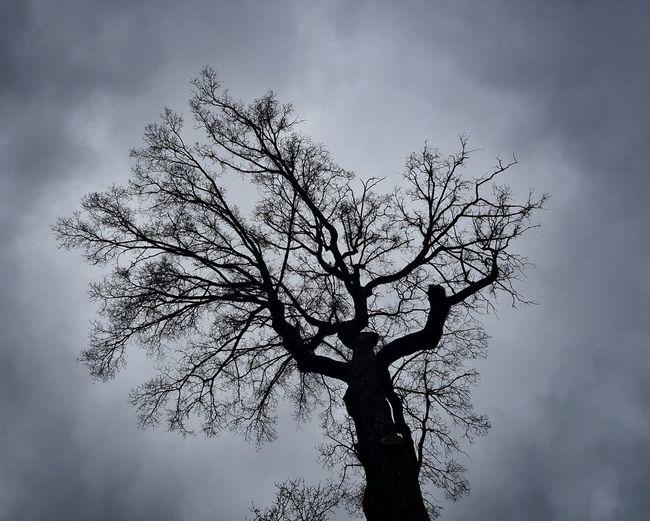 Nakedtree in