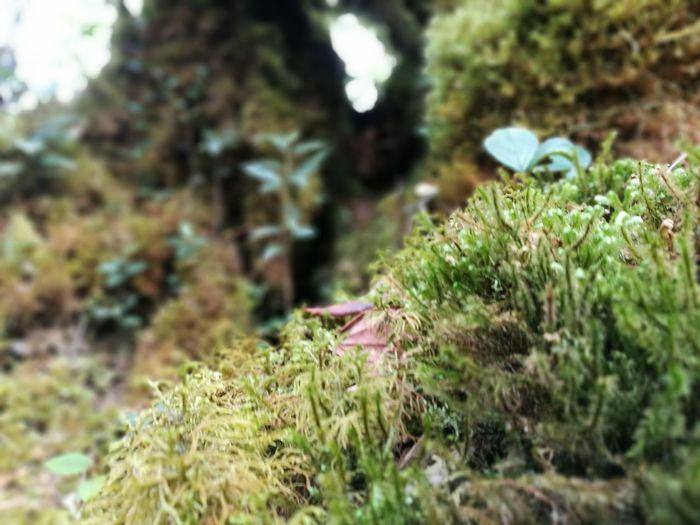 Minijungle Mountains Gunungirau Cameroon Highlands Macro Nature
