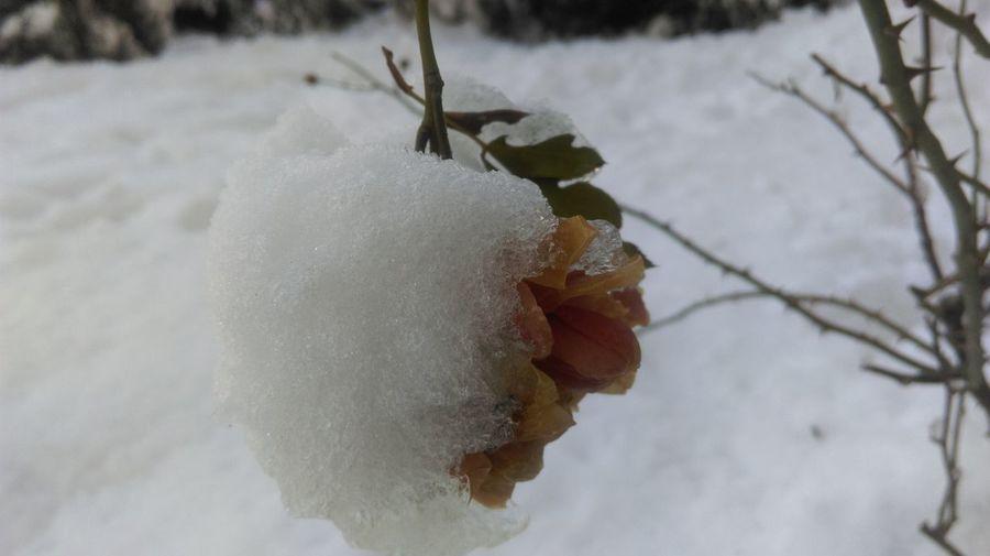 Wintertime frozen roses That's Me Relaxing Taking Photos roses Enjoying Life