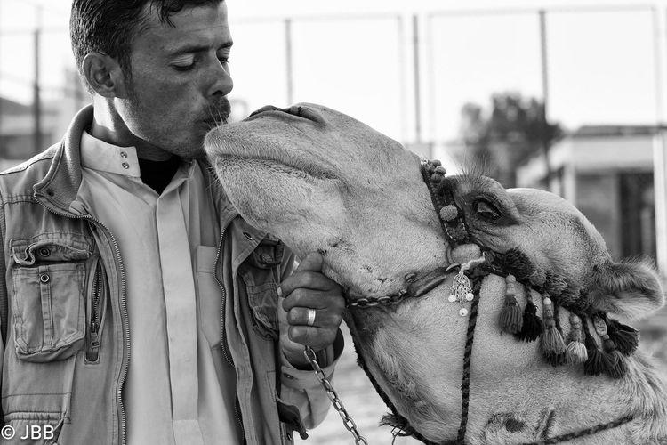 Camel Kiss, Egypt Trip Streetphotography Streetphoto_bw Street Portrait Peoplephotography Portrait Egypt EyeEm Best Shots