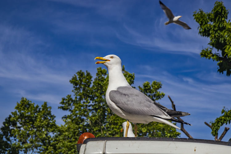 Low angle view of seagull perching on tree against sky