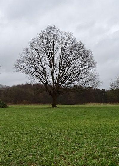 Naked Tree Plant Tree Bare Tree Grass Field Land Sky