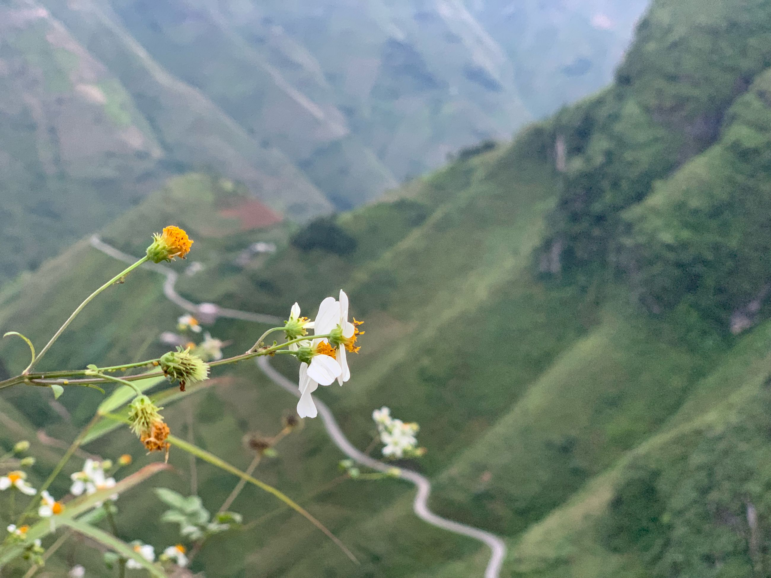 flowering plant, flower, beauty in nature, plant, growth, freshness, mountain, nature, vulnerability, fragility, focus on foreground, day, no people, landscape, scenics - nature, tranquility, flower head, petal, close-up, tranquil scene, outdoors