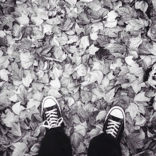 Fall is on the ground Fall_collection Autumn Nature Nature_collection Leaves IPhoneography