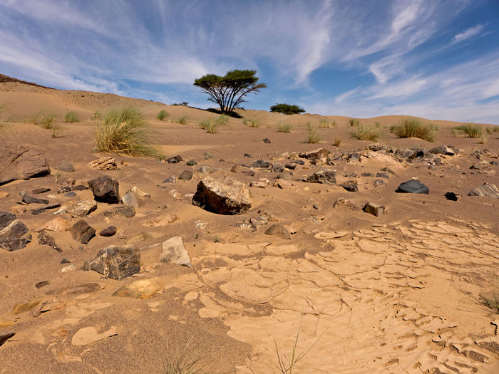 Isolated trees in the Sahara desert in Morocco Sand Scenics - Nature Desert Landscape Land Arid Climate Climate Beauty In Nature Environment Tranquility Sky Tranquil Scene Nature Non-urban Scene Cloud - Sky Semi-arid Morocco Sahara Adventure Extreme Terrain Hot Africa Rock Tree
